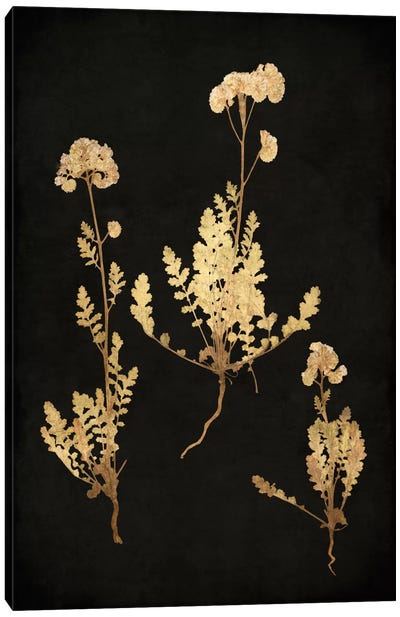 Golden Nature V Canvas Art Print