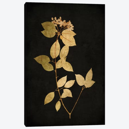 Golden Nature VI Canvas Print #KAB15} by Kate Bennett Art Print