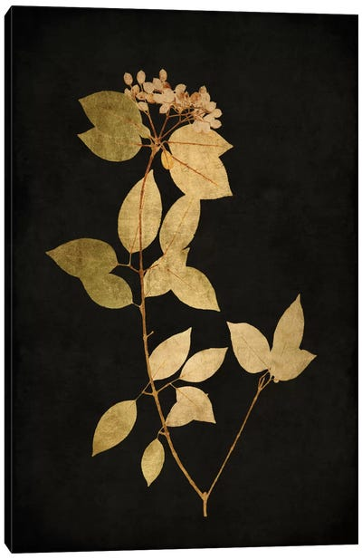 Golden Nature VI Canvas Art Print
