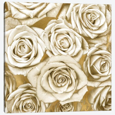 Ivory Roses On Gold Canvas Print #KAB25} by Kate Bennett Canvas Wall Art