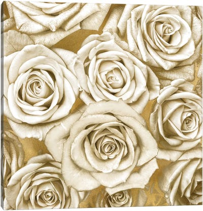 Ivory Roses On Gold Canvas Art Print
