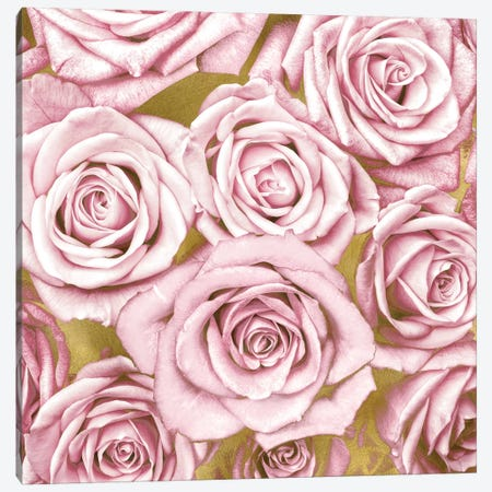 Pink Roses On Gold Canvas Print #KAB31} by Kate Bennett Canvas Wall Art