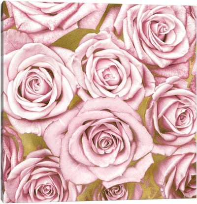 Pink Roses On Gold Canvas Art Print