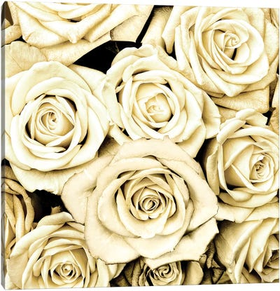 Roses Canvas Art Print