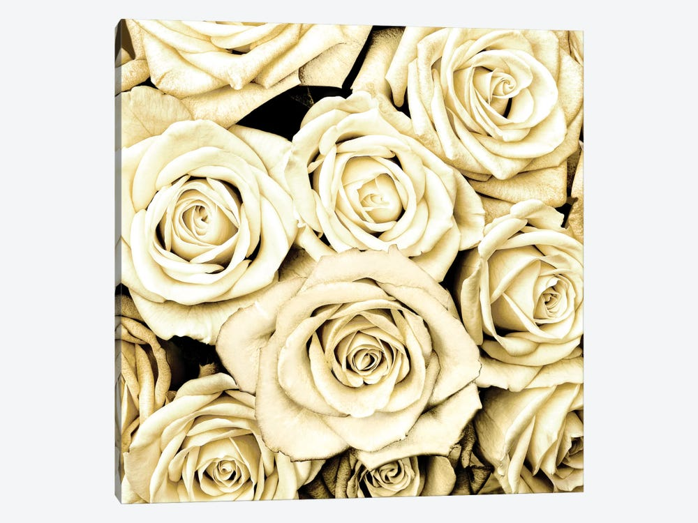Roses by Kate Bennett 1-piece Canvas Wall Art