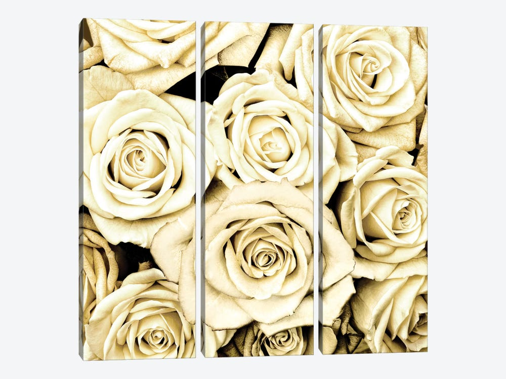 Roses by Kate Bennett 3-piece Canvas Artwork
