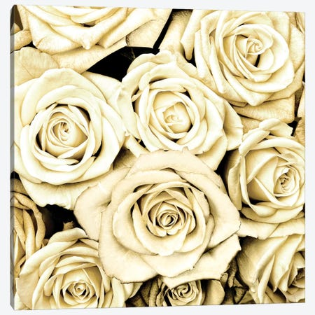 Roses Canvas Print #KAB32} by Kate Bennett Canvas Wall Art
