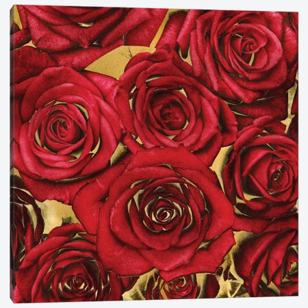 Roses - Red On Gold Canvas Print #KAB35} by Kate Bennett Canvas Print