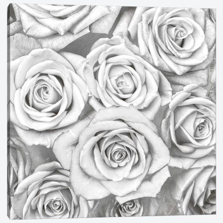 Roses - White On Silver Canvas Print #KAB38} by Kate Bennett Canvas Art