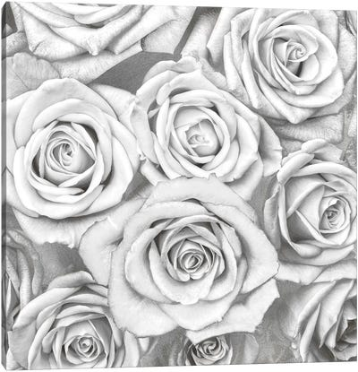 Roses - White On Silver Canvas Art Print