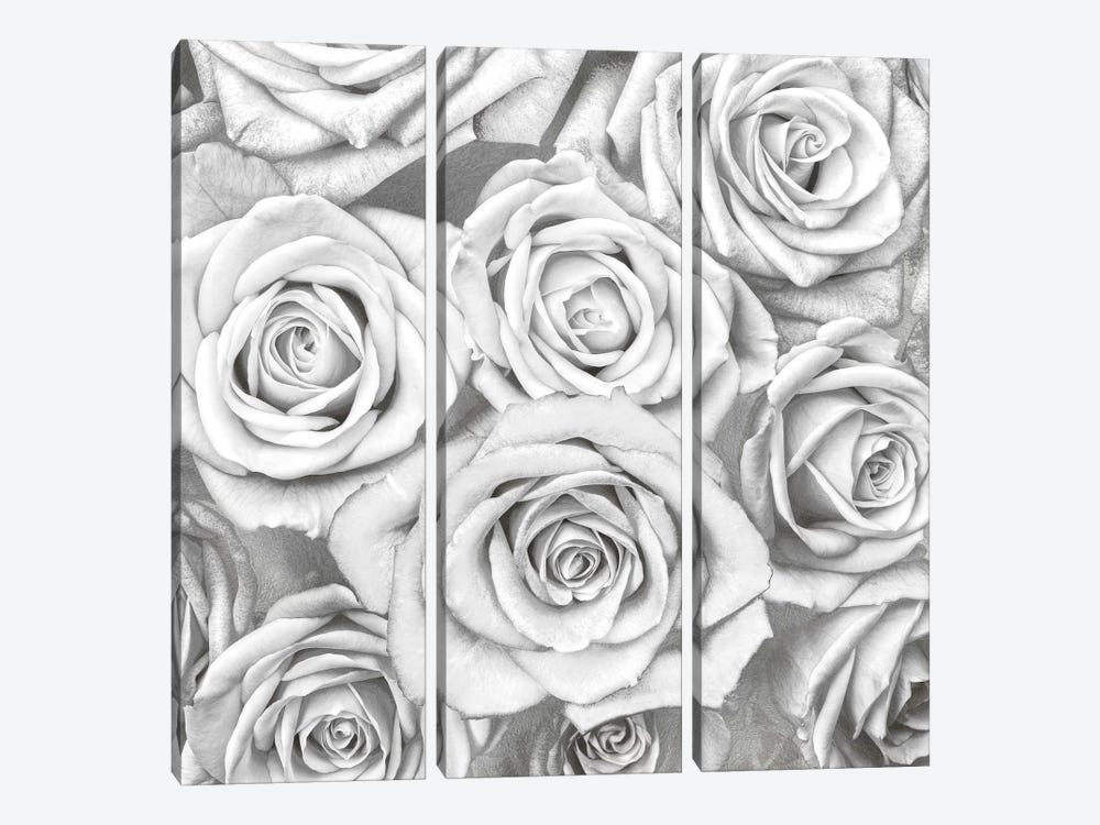 Roses - White On Silver 3-piece Canvas Wall Art
