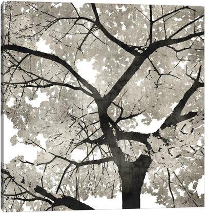 Silver Leaves Canvas Art Print