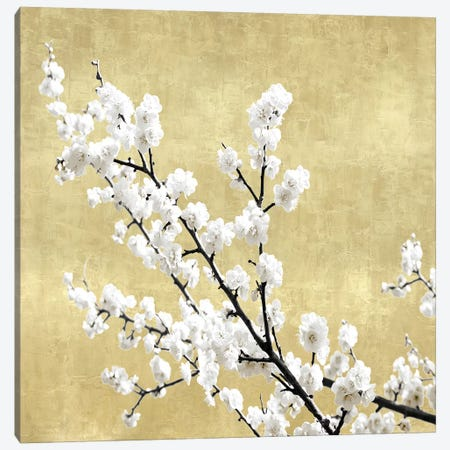 Blossoms on Gold I 3-Piece Canvas #KAB48} by Kate Bennett Art Print