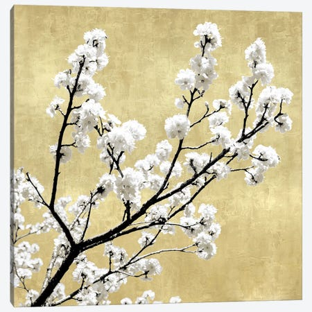 Blossoms on Gold II 3-Piece Canvas #KAB49} by Kate Bennett Canvas Art Print