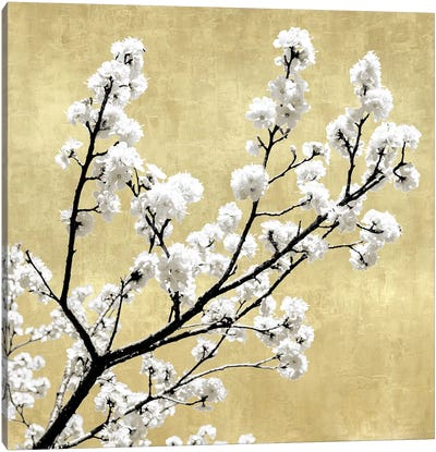 Blossoms on Gold II Canvas Art Print