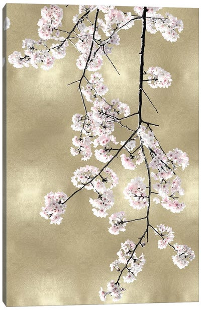 Pink Blossoms on Gold III Canvas Art Print