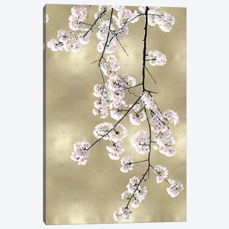 Pink Blossoms on Gold III Canvas Print #KAB52} by Kate Bennett Canvas Artwork