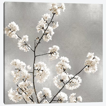 Silver Blossoms I Canvas Print #KAB53} by Kate Bennett Canvas Wall Art