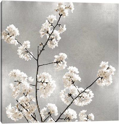 Silver Blossoms I Canvas Art Print
