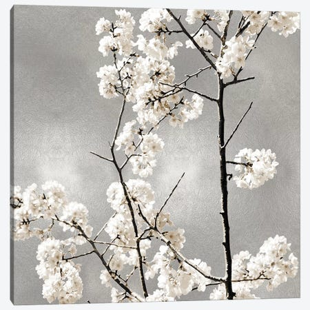 Silver Blossoms II Canvas Print #KAB54} by Kate Bennett Art Print