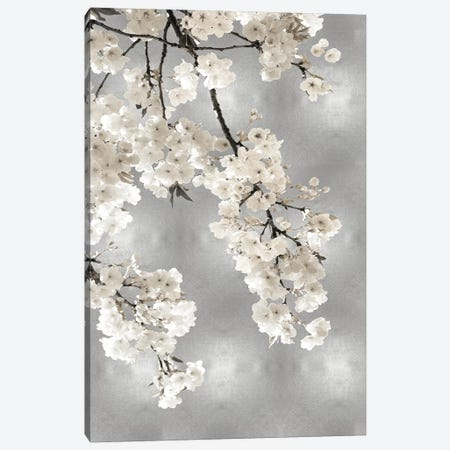 White Blossoms on Silver I 3-Piece Canvas #KAB55} by Kate Bennett Canvas Art Print