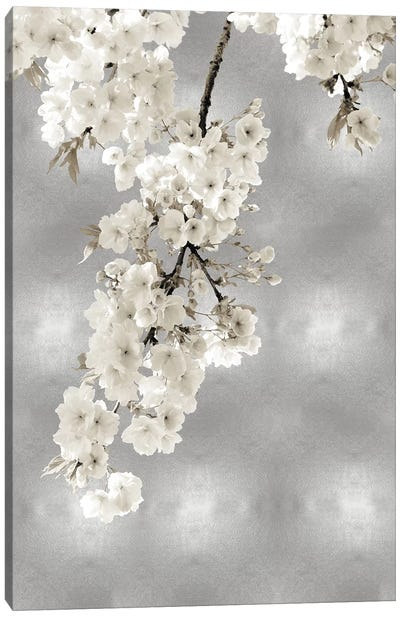 White Blossoms on Silver II Canvas Art Print
