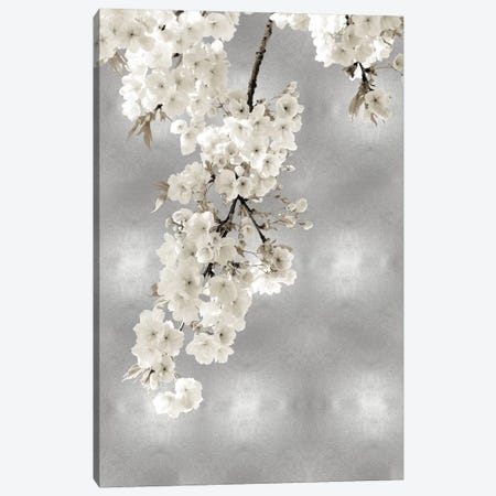 White Blossoms on Silver II Canvas Print #KAB56} by Kate Bennett Canvas Print