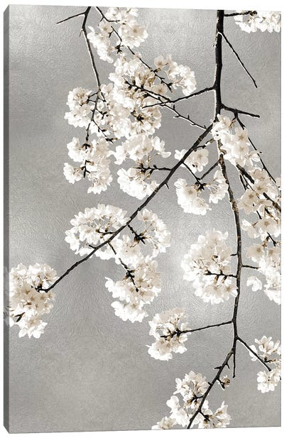 White Blossoms on Silver III Canvas Art Print
