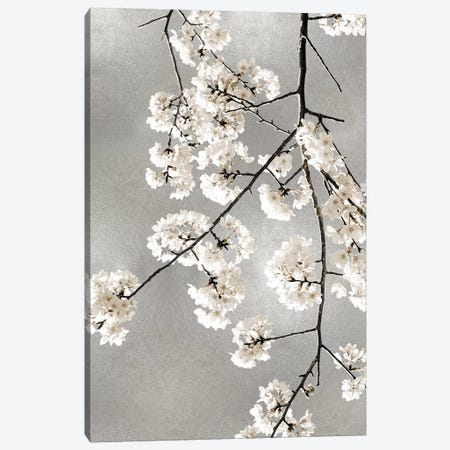 White Blossoms on Silver III 3-Piece Canvas #KAB57} by Kate Bennett Art Print