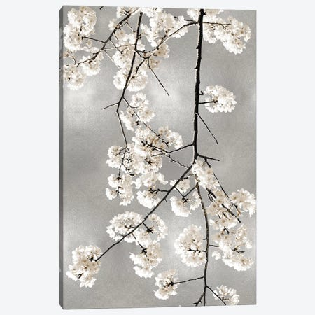 White Blossoms on Silver IV Canvas Print #KAB58} by Kate Bennett Canvas Wall Art