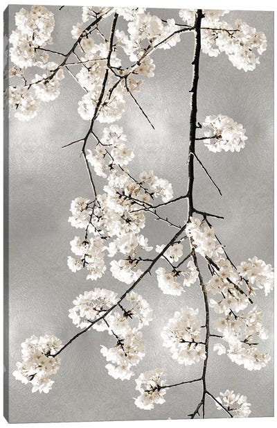 White Blossoms on Silver IV Canvas Art Print