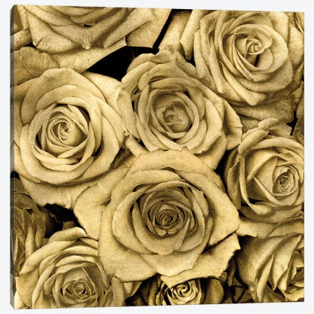 Gold Roses Canvas Print #KAB5} by Kate Bennett Canvas Wall Art