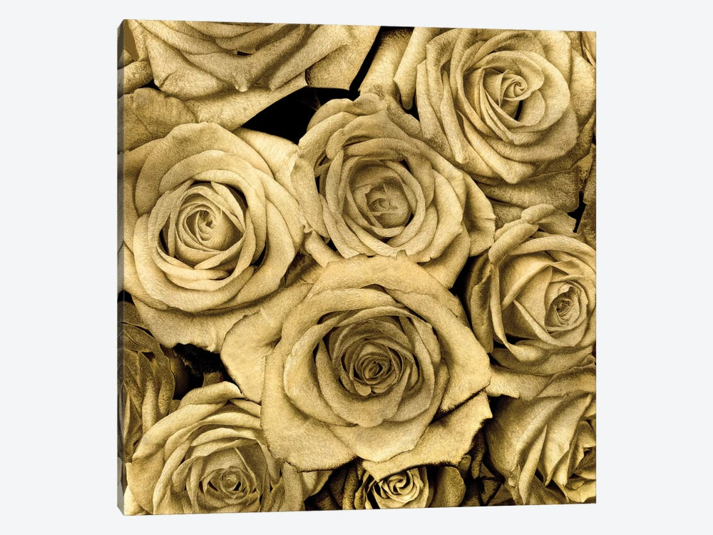 Gold Roses by Kate Bennett 1-piece Canvas Artwork