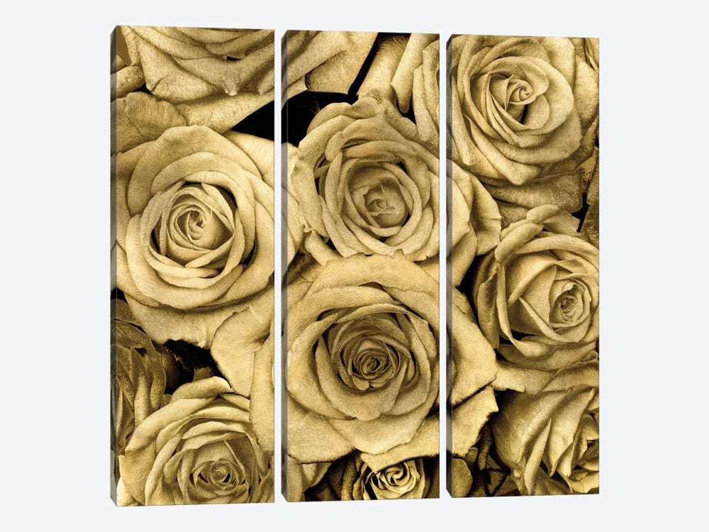 Gold Roses by Kate Bennett 3-piece Canvas Wall Art
