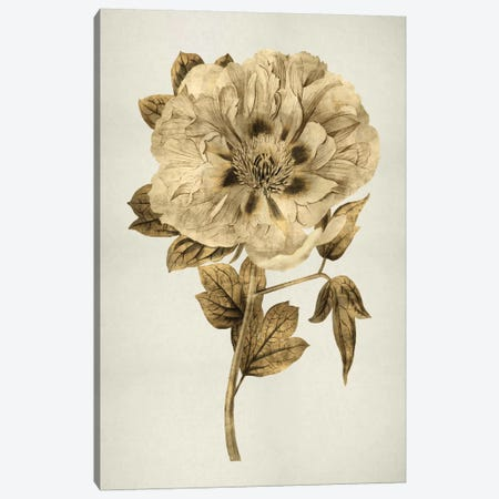 Gold Tulip I Canvas Print #KAB6} by Kate Bennett Canvas Artwork
