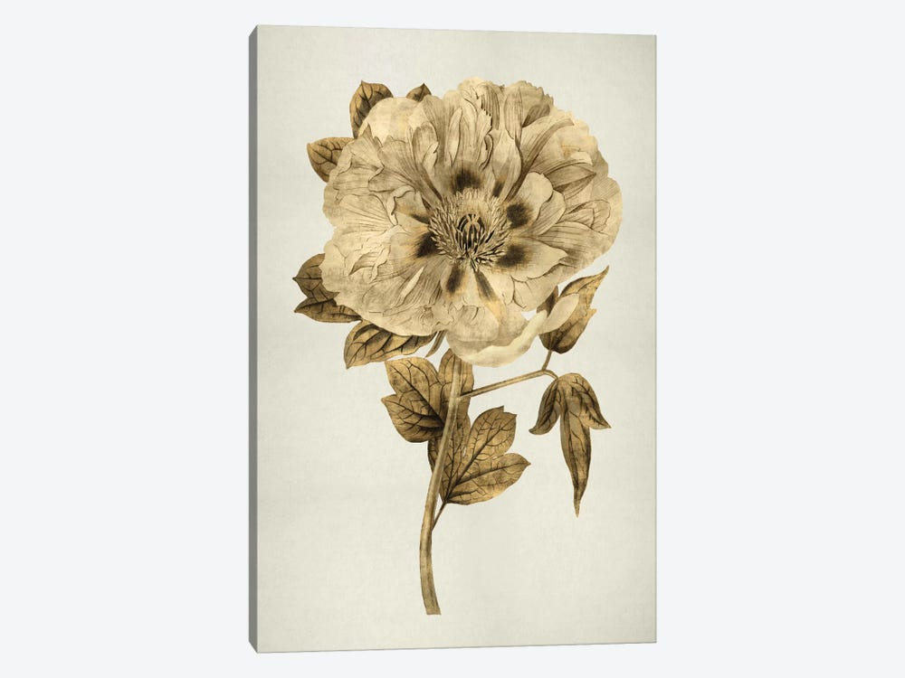 Gold Tulip I by Kate Bennett 1-piece Art Print