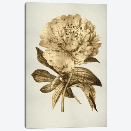 Gold Tulip II Canvas Print #KAB7} by Kate Bennett Canvas Artwork