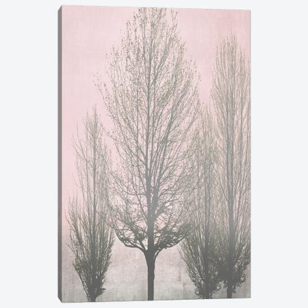 Gray Trees On Pink Panel II Canvas Print #KAB82} by Kate Bennett Canvas Art Print