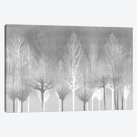 Silver Trees Canvas Print #KAB83} by Kate Bennett Canvas Print