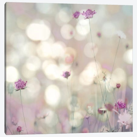 Floral Meadow I Canvas Print #KAC13} by Kate Carrigan Canvas Print