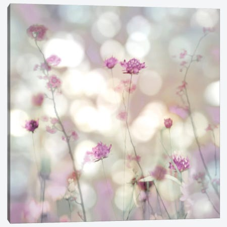 Floral Meadow II Canvas Print #KAC14} by Kate Carrigan Canvas Art