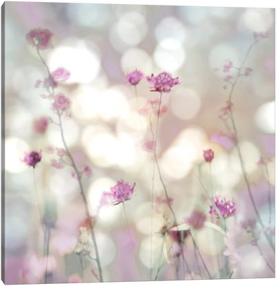Floral Meadow II Canvas Art Print