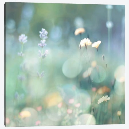 Morning Meadow I Canvas Print #KAC29} by Kate Carrigan Canvas Art
