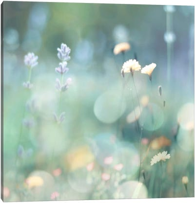 Morning Meadow I Canvas Art Print