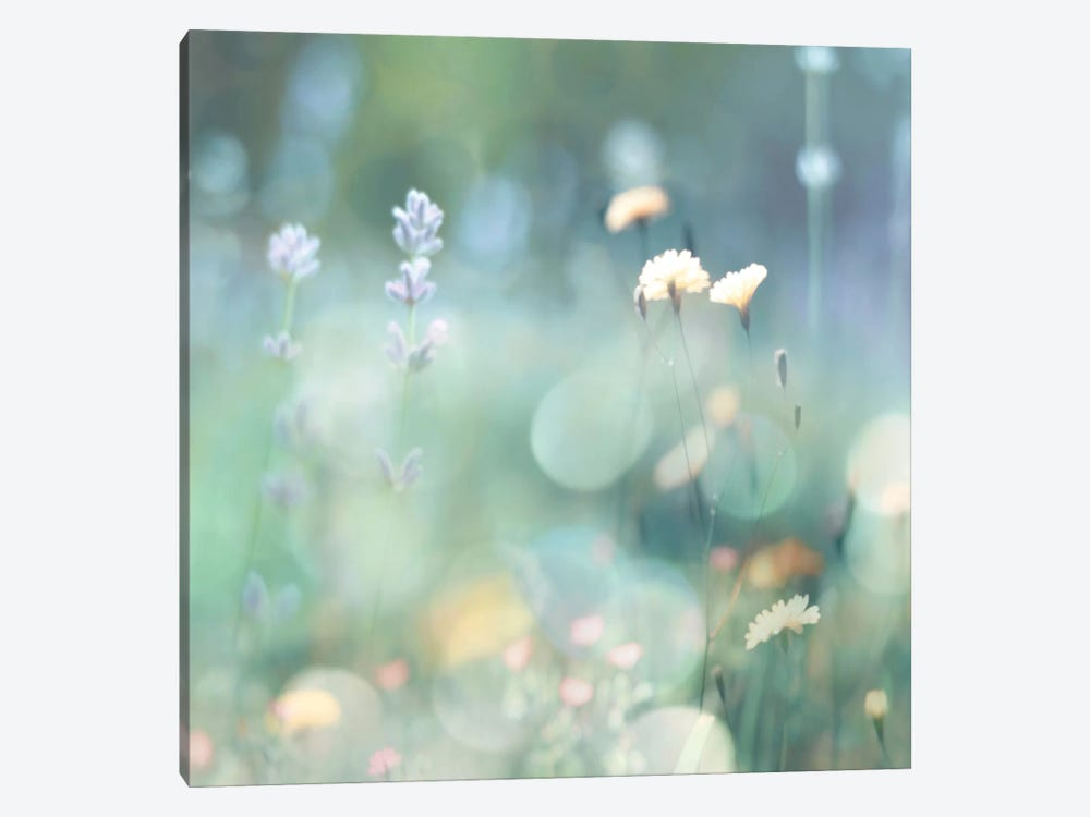 Morning Meadow I by Kate Carrigan 1-piece Canvas Art Print