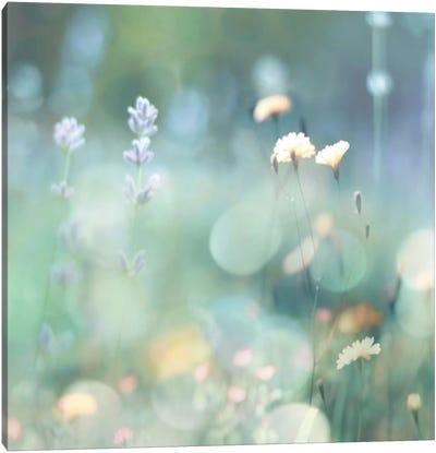 Morning Meadow I Canvas Art Print