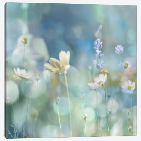 Morning Meadow II Canvas Print #KAC30} by Kate Carrigan Canvas Print