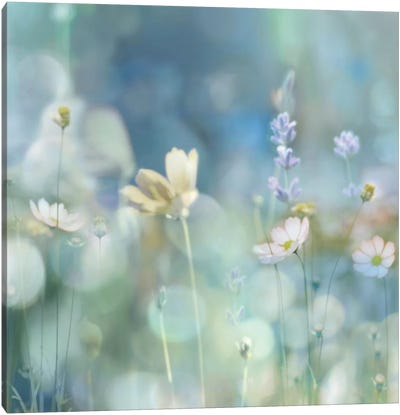 Morning Meadow II Canvas Art Print