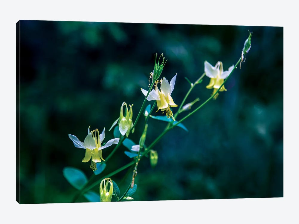 Yellow Bells by Sarah Kadlecek 1-piece Canvas Wall Art