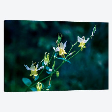 Yellow Bells Canvas Print #KAD30} by Sarah Kadlecek Canvas Artwork